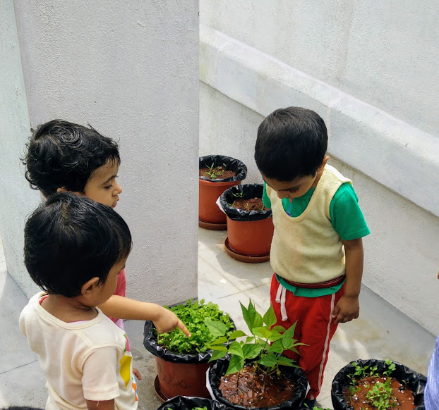 Inspecting the growth of the plants together