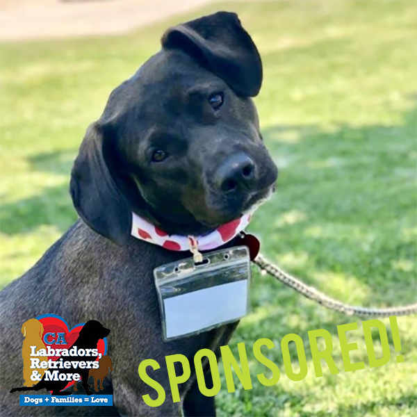 Petra loves to get out for her daily walk around the neighborhood. She can be a little sassy with other dogs while on leash so the 3030 Challenge would be a good opportunity for her to work on that training,