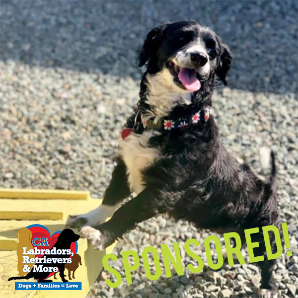 """Every 3030 Challenge needs a lowrider! Despite being small, she loves adventure and is looking for a family who will keep her active. Currently she walks 2 to 3 miles each day, enjoys hikes, and also regularly visits the """"small dog"""" area of the dog park."""