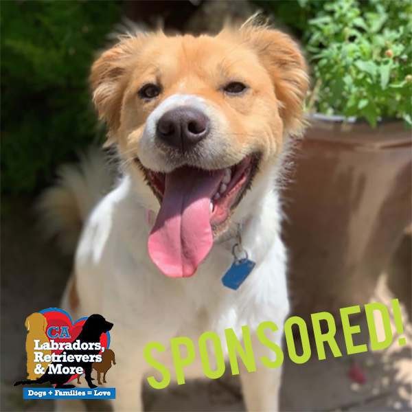 Cookie is an active girl who loves to run and play fetch. Help Cookie get her daily dose of fun by sponsoring her registration for the 3030 Challenge!