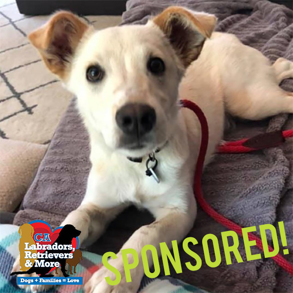 When Erim started to limp and was in obvious pain, his owners left him at a shelter. Short on resources, the shelter reached out to Labs and More to help Erim get the surgery he needs. Erim won't be ready to participate in the 3030 Challenge, but we'd like to make him an honorary member of #team3030. After he recovers from surgery he will be good as new and ready to be a lifelong walking buddy to a furever family.