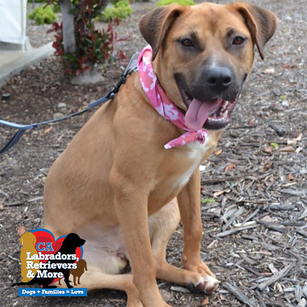 Sweet Brandy loves running sprints around the backyard in her foster home and playing with the resident dog. She's a fun and goofy gal who is looking for an active family, but in the meantime her foster parents have committed to the 3030 Challenge.