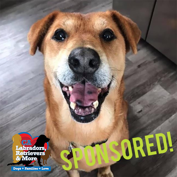 This goofy gal is most often seen flopping over on her back for belly rubs or gently placing her paw on you to request attention, but she's always up for a fun outing too! She's fostered with another dog and would love the challenge of 30 miles in 30 days!