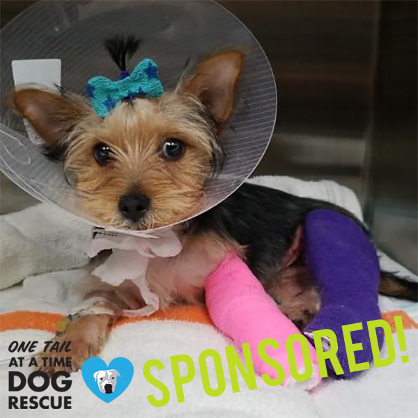 Lavender is tiny but mighty! She was picked up by One Tail at a Time with extensive injuries. She will have immediate surgery on a broken pelvis. After that surgery she will need to return to fix three more broken bones, in addition to the lacerations she endured. Team3030 is rooting for her and we'd love to have her as an honorary member of the 3030 Challenge.