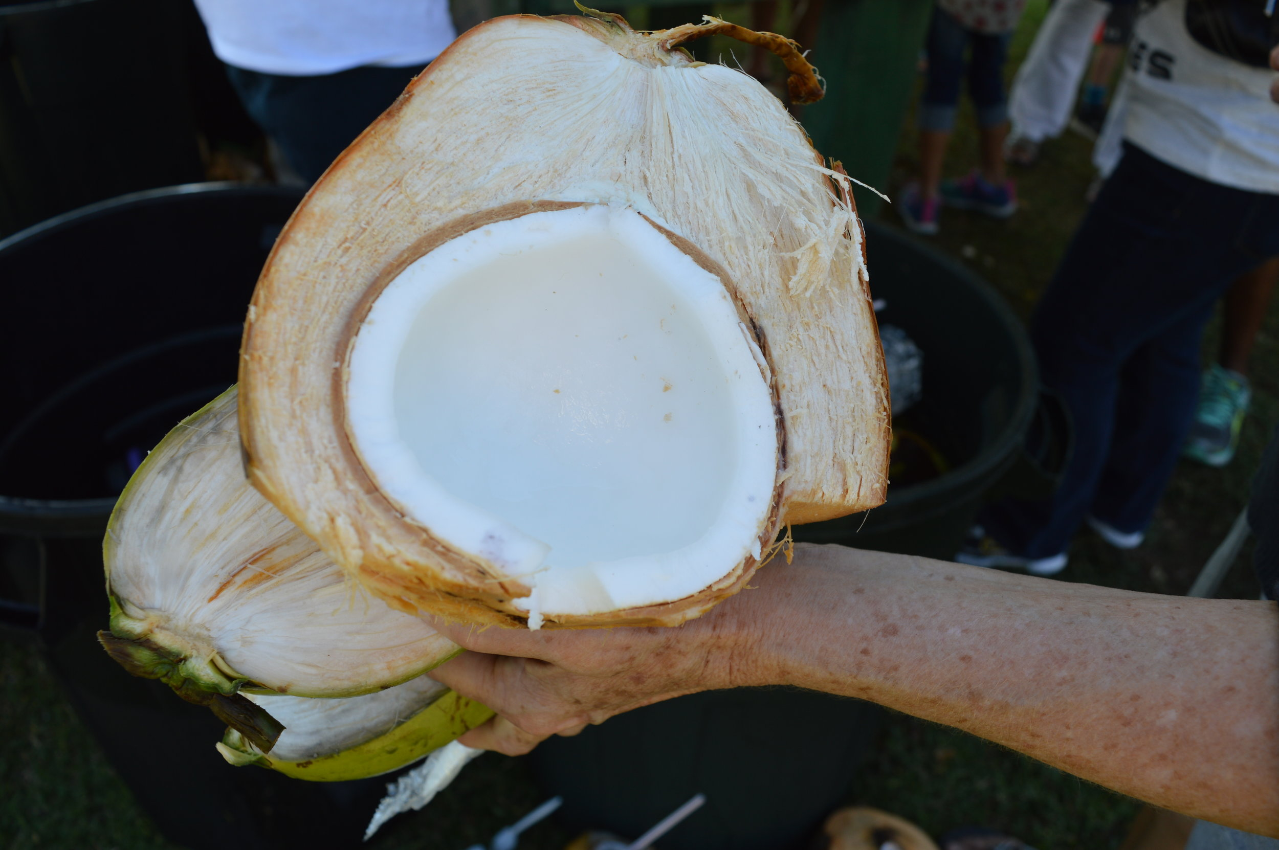 Inch thick fresh coconut meat - can't get no fresha dan dis!