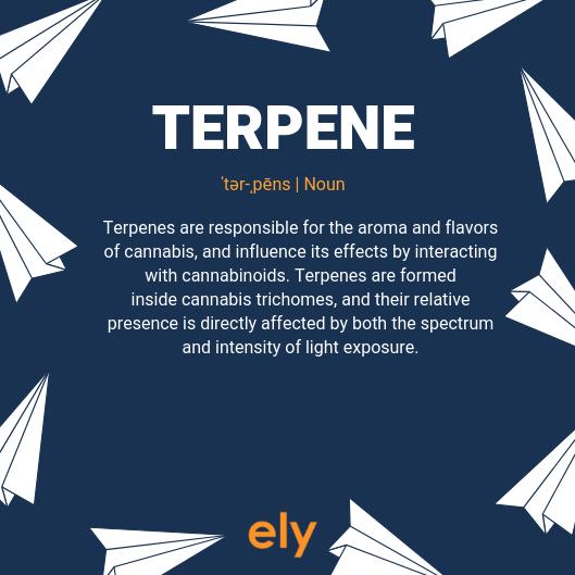 TERPENE.png
