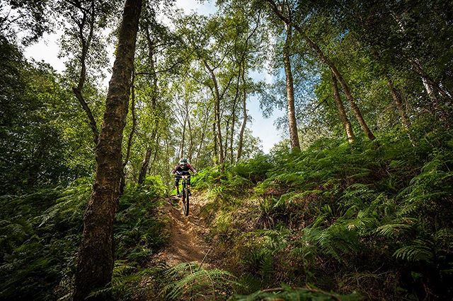 @southernenduro round at Pippingford looked ace, especially when the sun shone!  #enduromtb #mtbphotooftheday #mtbphotos #mtbphotography #mountainbiking #mountainbike #southernenduro