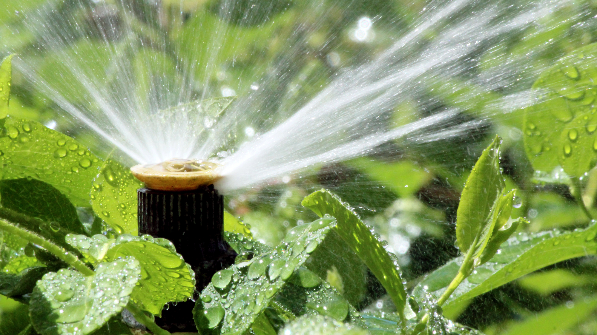 Copy of Sprinkler Repair Lehi