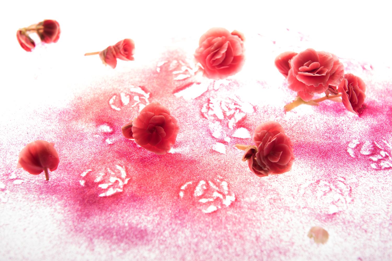 sandy_flowers5.jpg