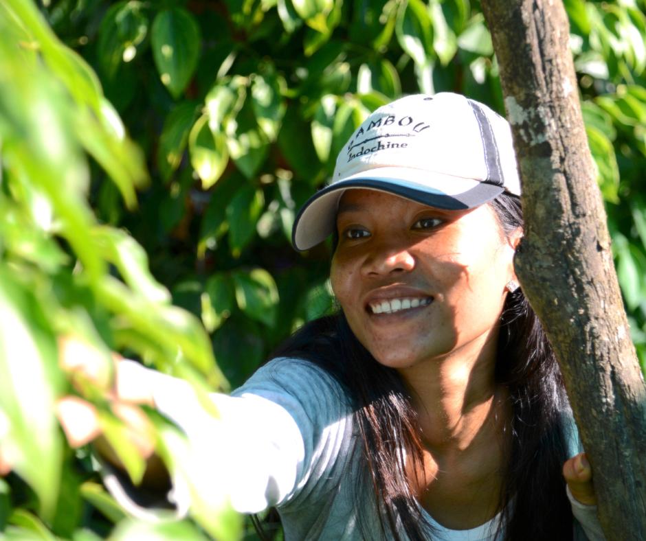 Organic farmer kampot pepper botree cambodia