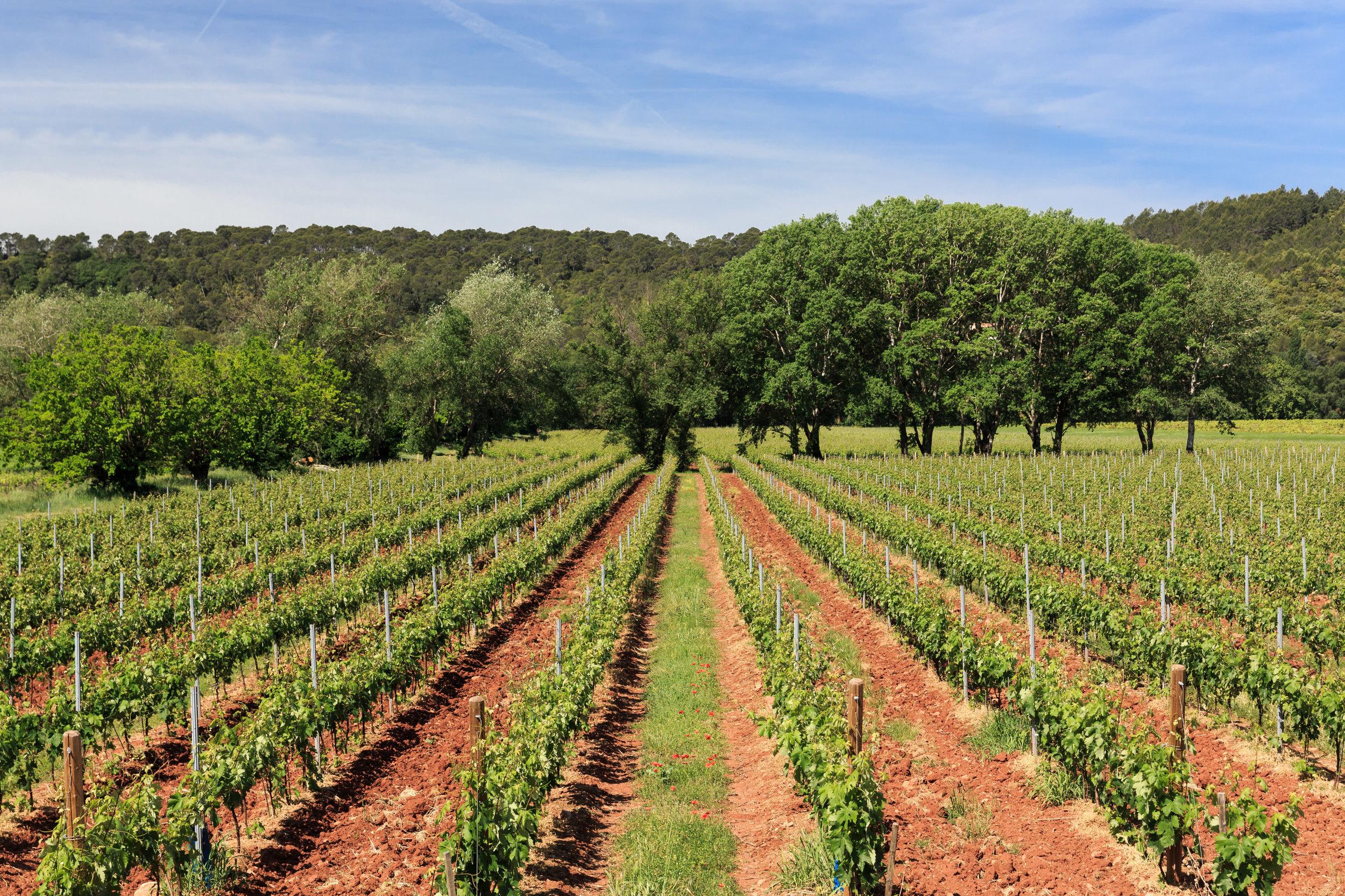 Vignoble du Château de Saint Martin en Provence