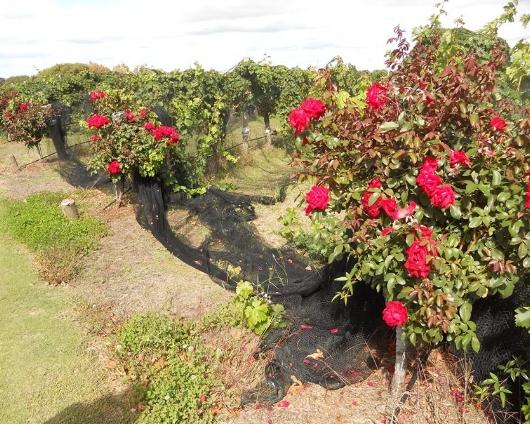 Vignobles de Margaret River en Australie