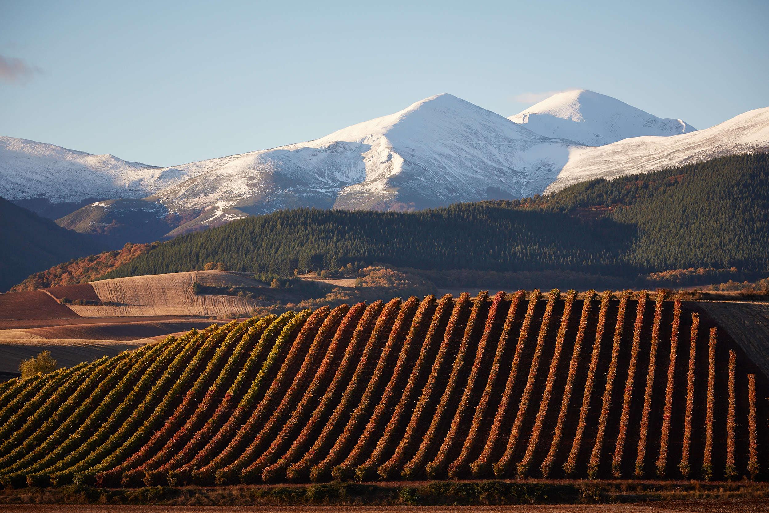 Wine Scenery Landscape La Rioja Spain by James Sturcke