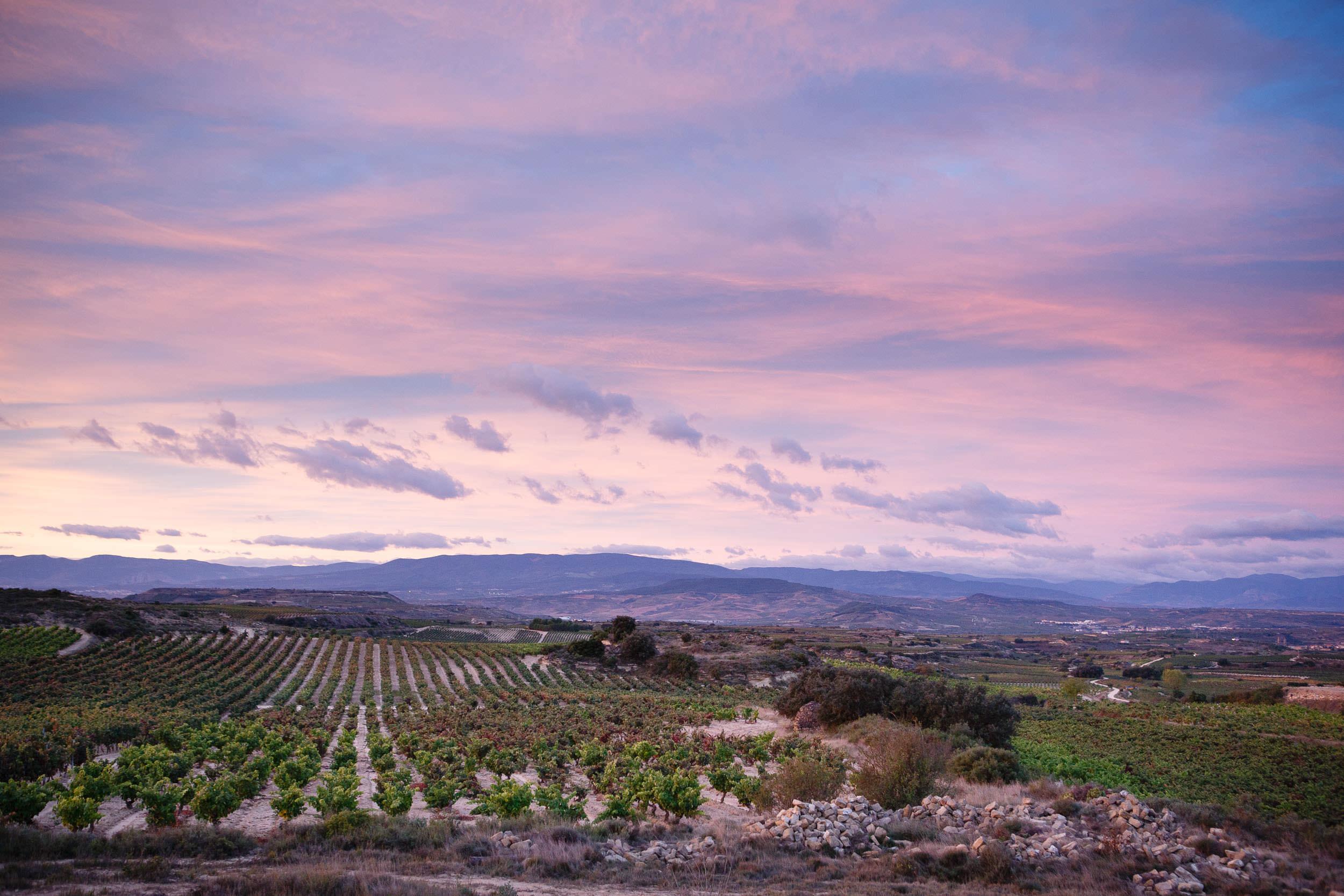 Wine Photography Grape Harvest in Ribera del Duero Toro and Rioja Alavesa Spain - James Sturcke  Photographer | sturcke.org_004.jpg
