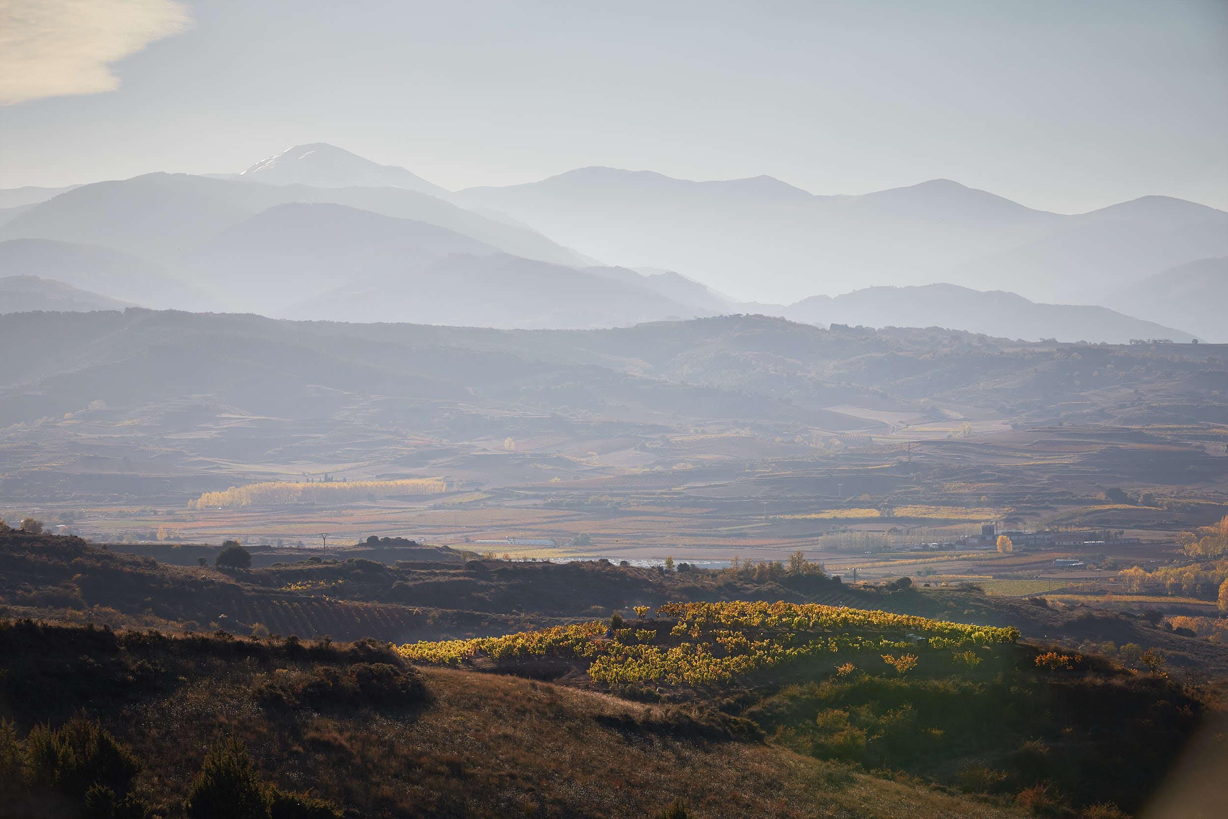 15/11/16 Rioja vineyards near Camprovín, La Rioja, Spain. Foto de James Sturcke | www.sturcke.org