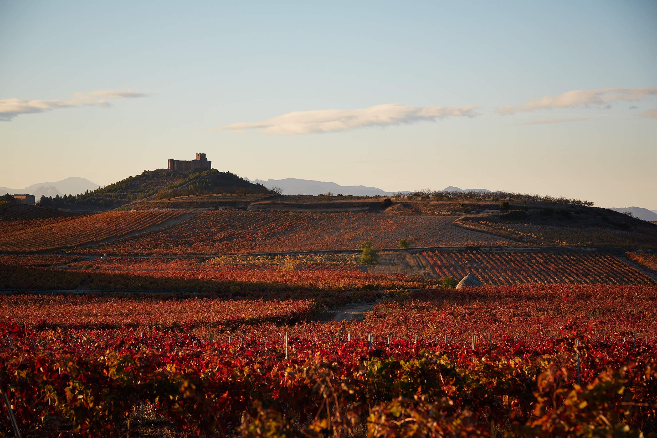 15/11/16 Davalillo castle among Rioja vineyards, Spain. Foto de James Sturcke | www.sturcke.org