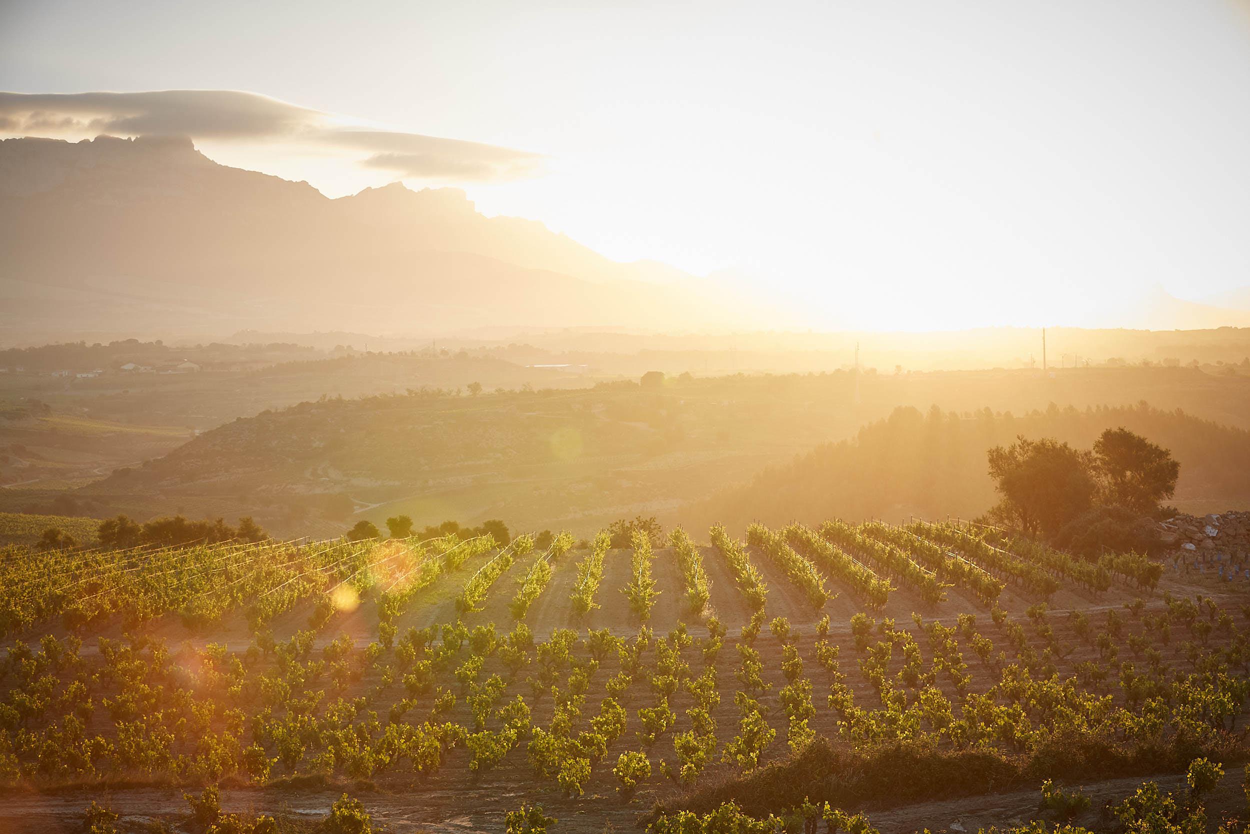 1706Montecillo_Winery_La_Rioja_Spain_Sturcke_0001.jpg