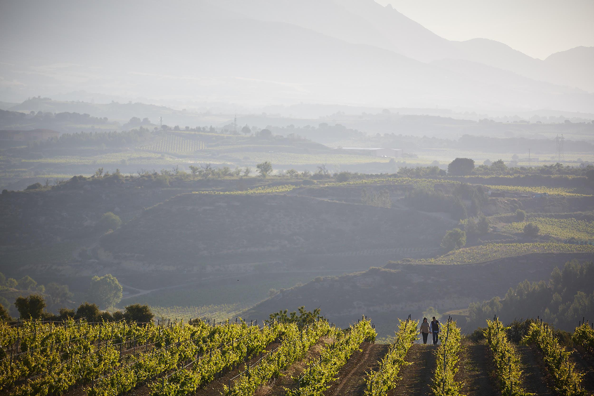 1706Montecillo_Winery_La_Rioja_Spain_Sturcke_0008.jpg