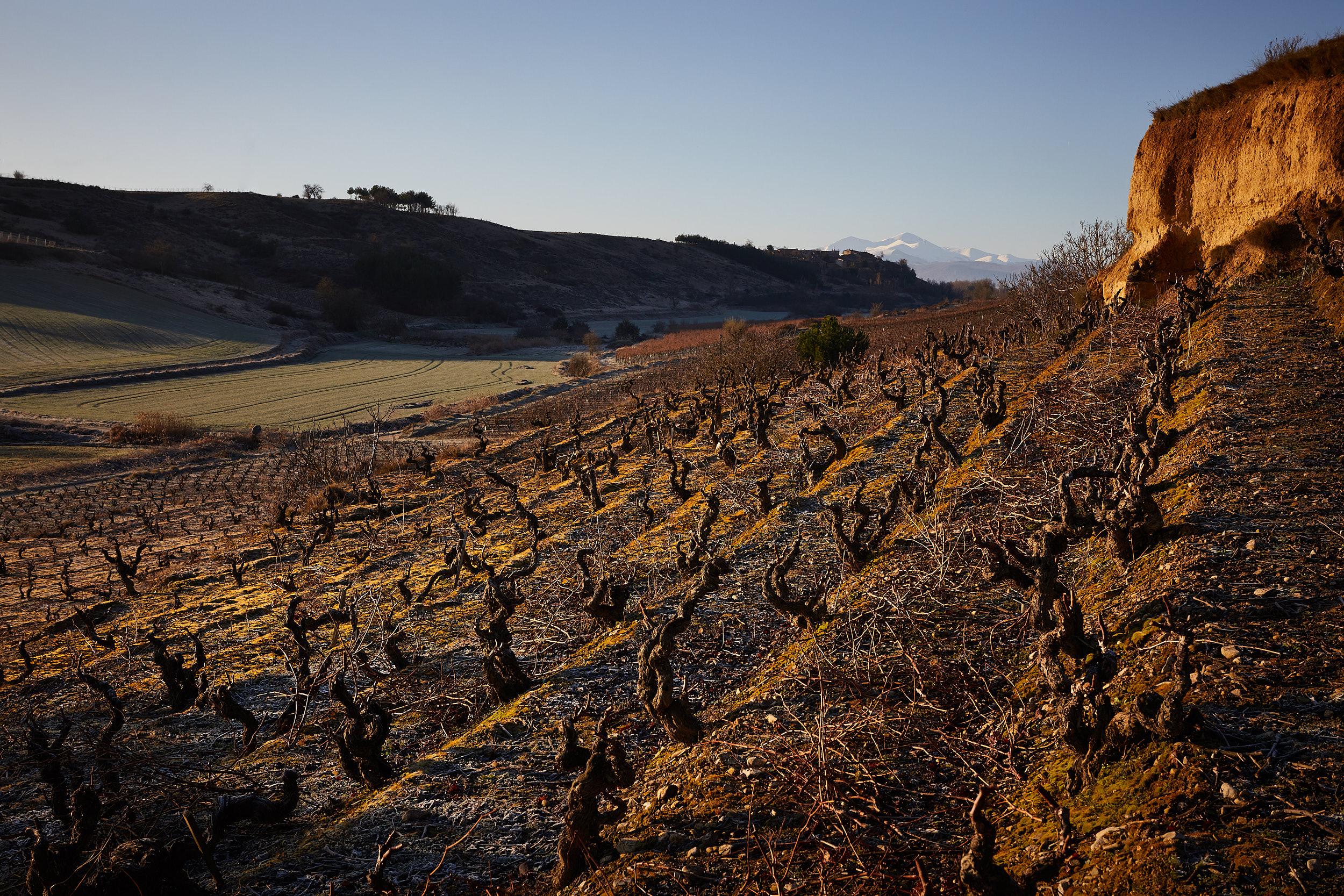 31/1/18  Gómez Cruzado vineyard in Ollauri, La Rioja, Spain. Photo by James Sturcke | sturcke.org