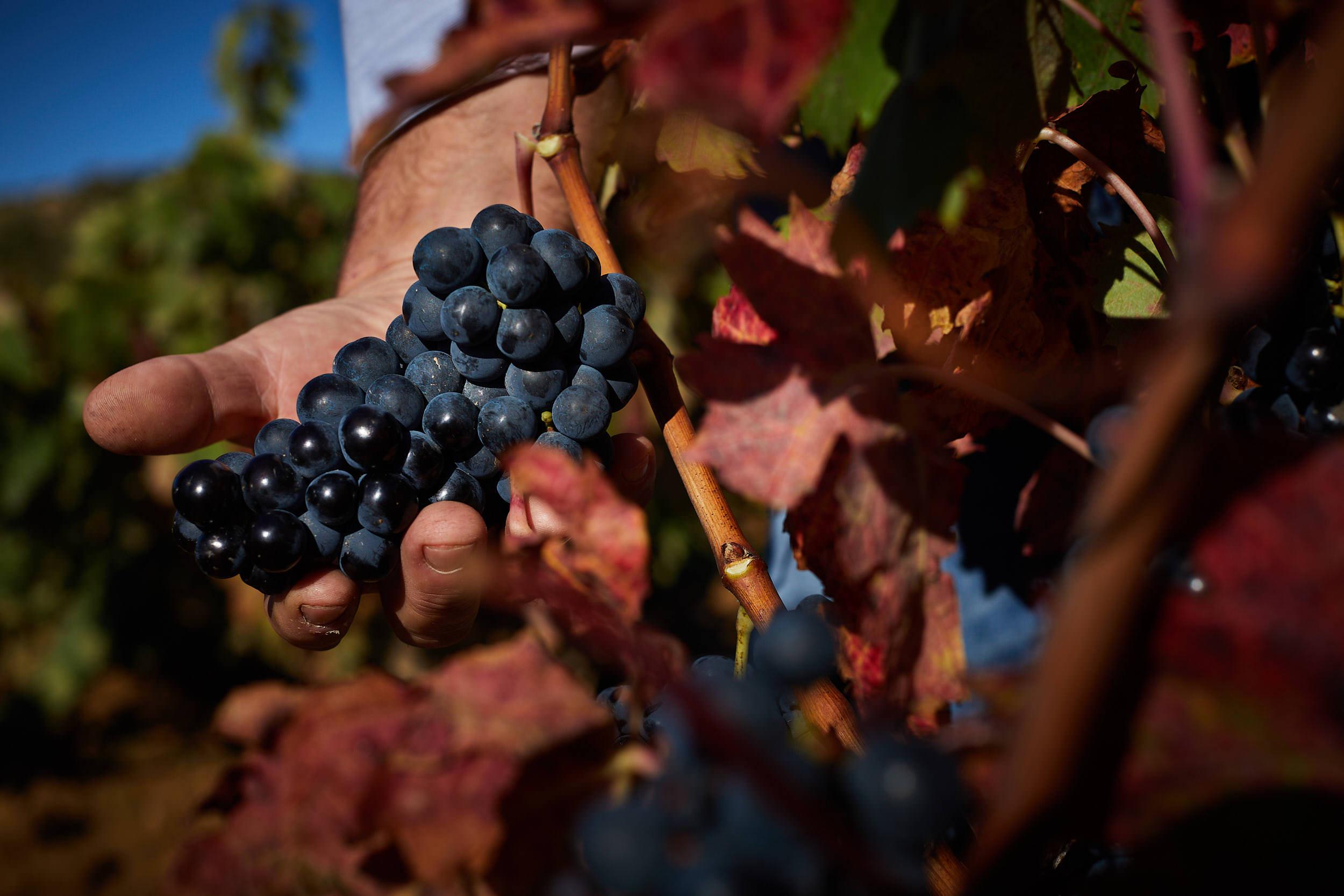 1810Commercial_Photographer_Rioja_Spain_Sturcke_0011.jpg