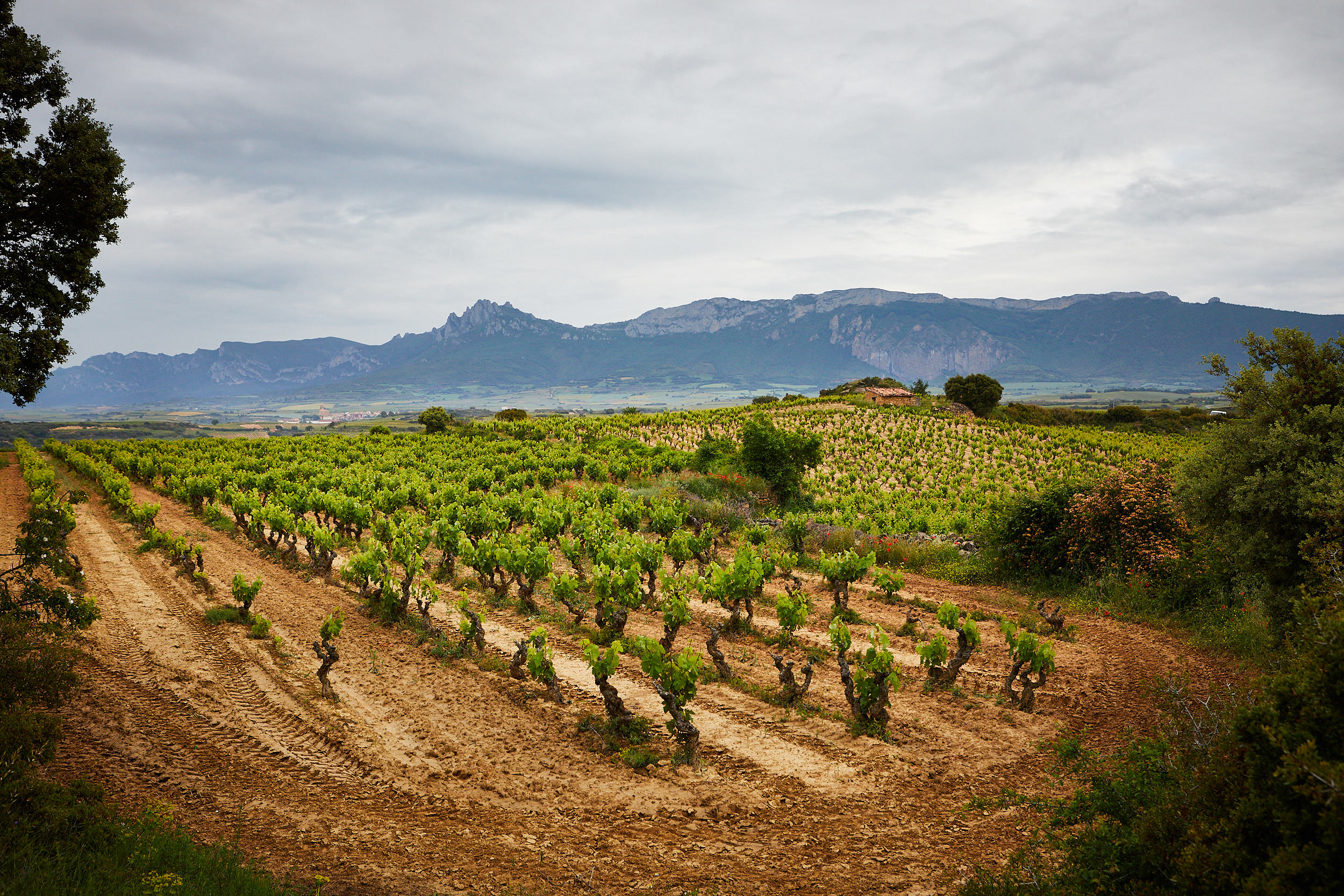 1806Basque_Country_Rioja_Spain_Wine_Photographer_James_Sturcke_0036.jpg