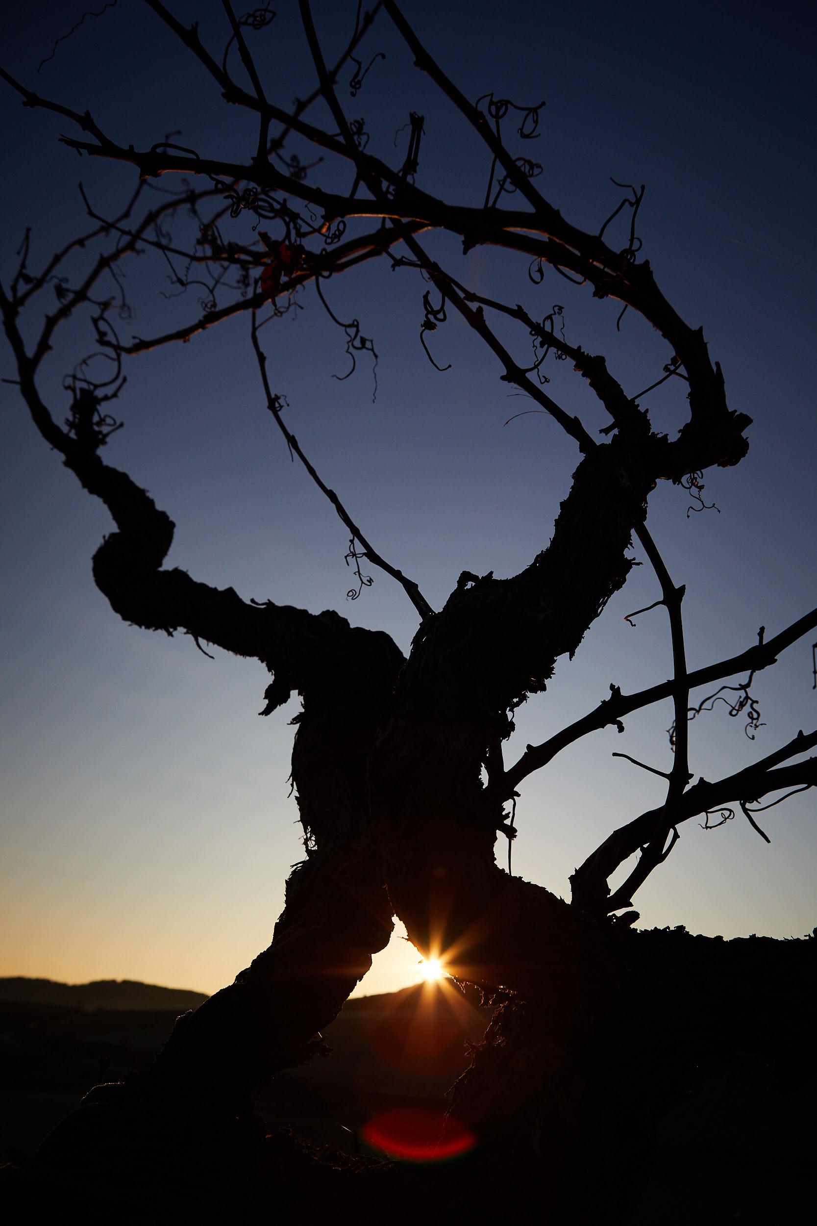 1801Commercial-professional-wine-photography-la-rioja-spain-James-Sturcke_0005.jpg