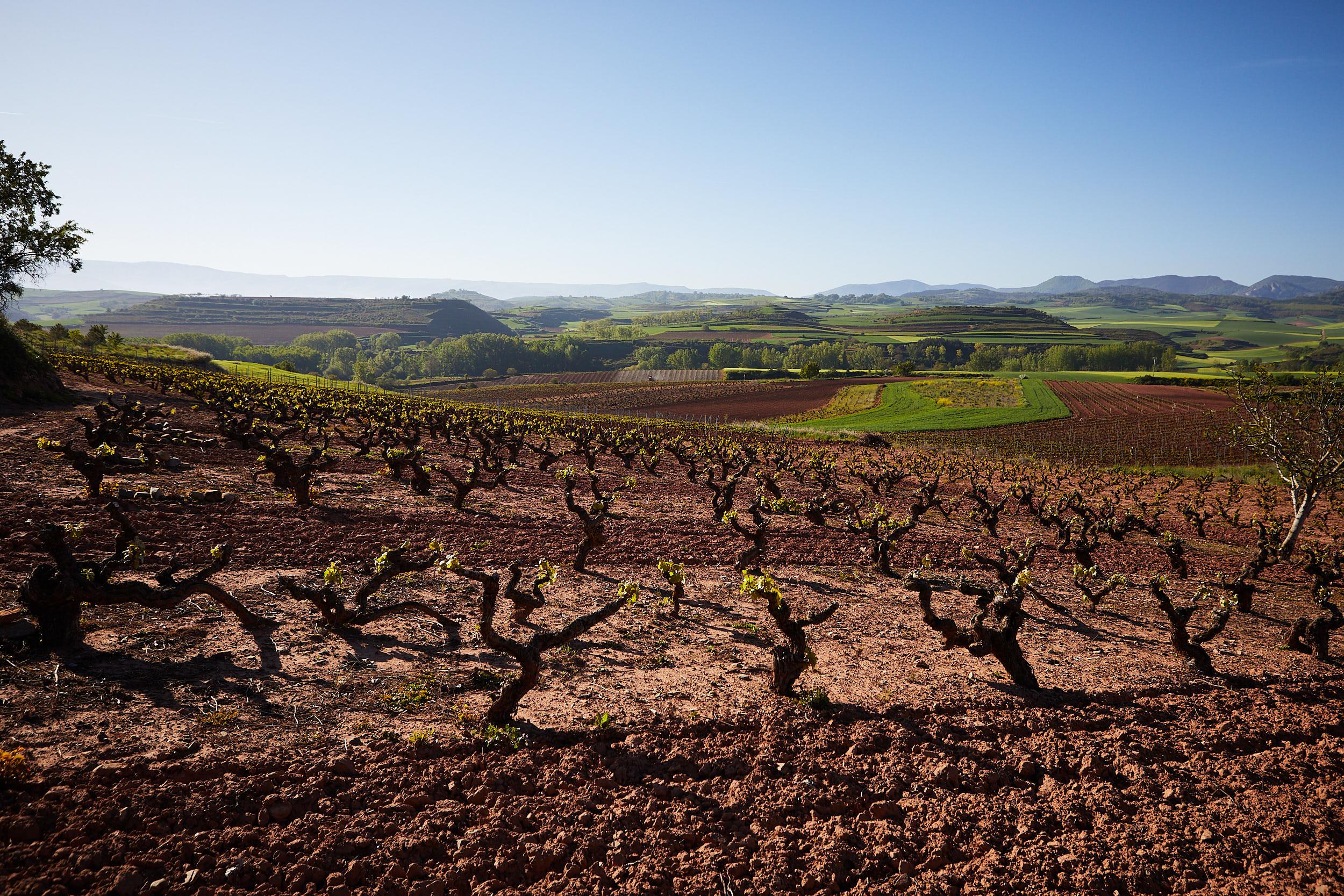 1805Commercial-professional-wine-photography-la-rioja-spain-James-Sturcke_0015.jpg