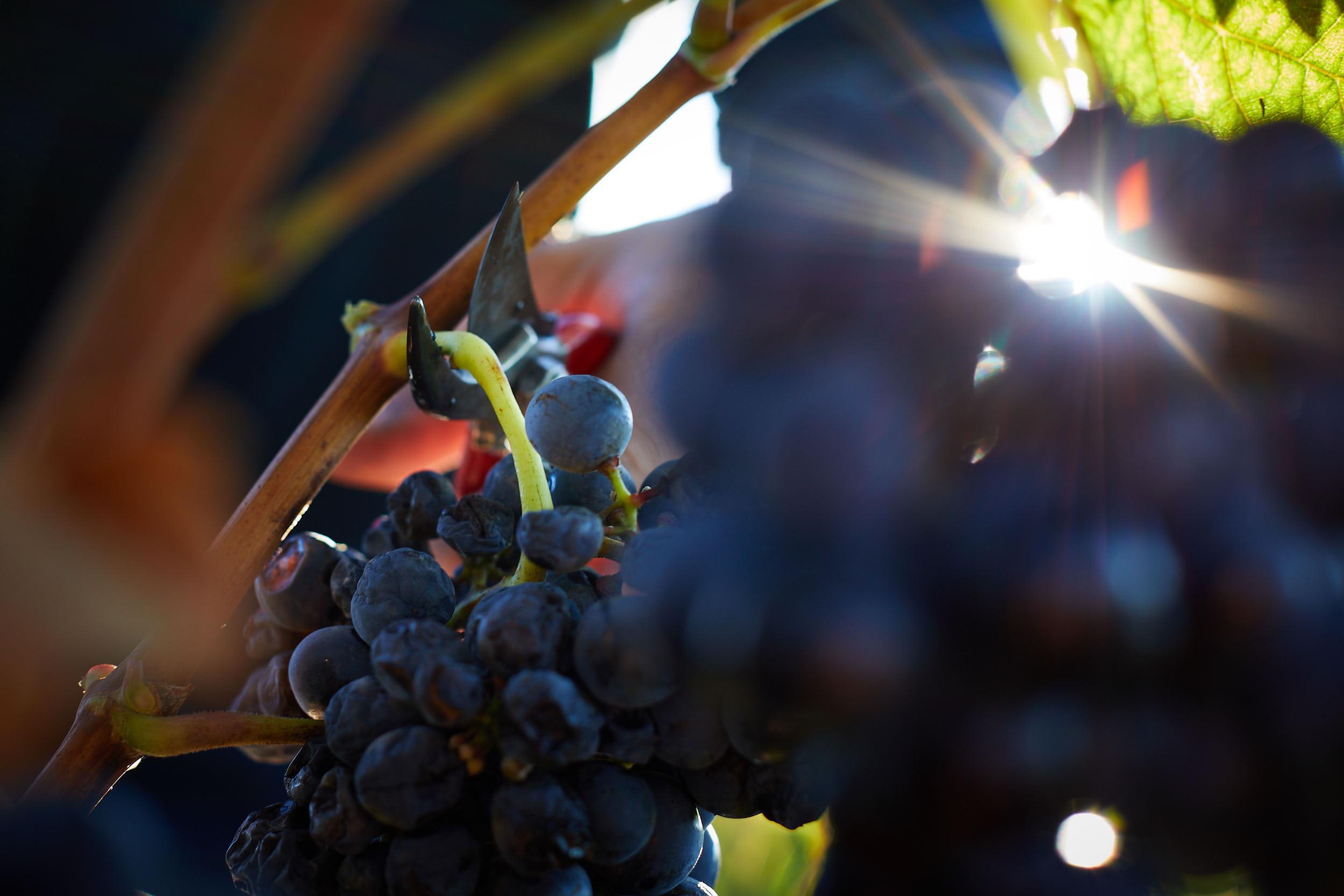 1810Commercial-professional-wine-photography-la-rioja-spain-James-Sturcke_0040.jpg