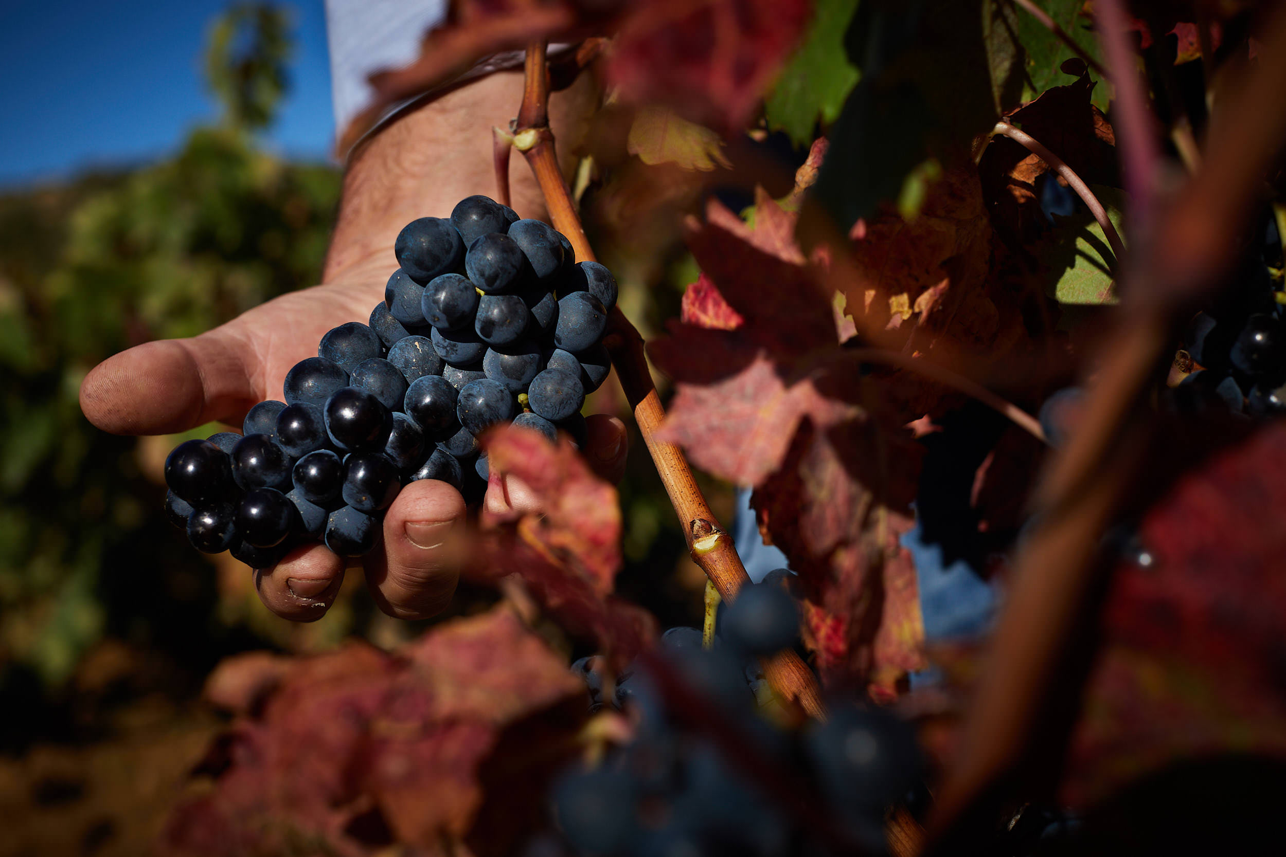 1810Commercial-professional-wine-photography-la-rioja-spain-James-Sturcke_0041.jpg