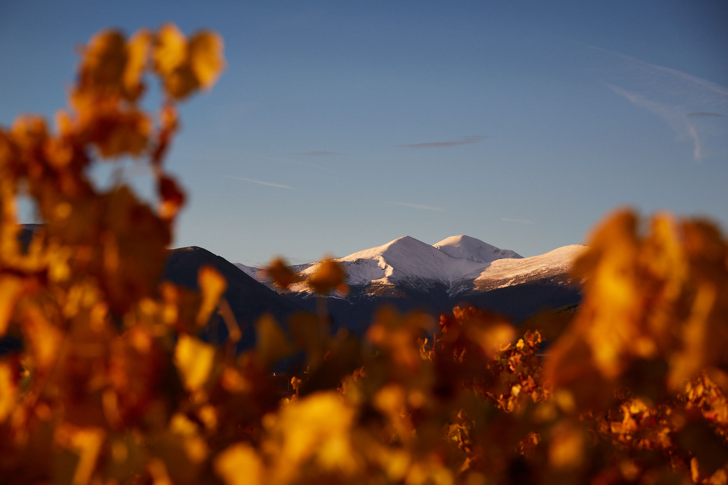 1811Commercial-professional-wine-photography-la-rioja-spain-James-Sturcke_0047.jpg