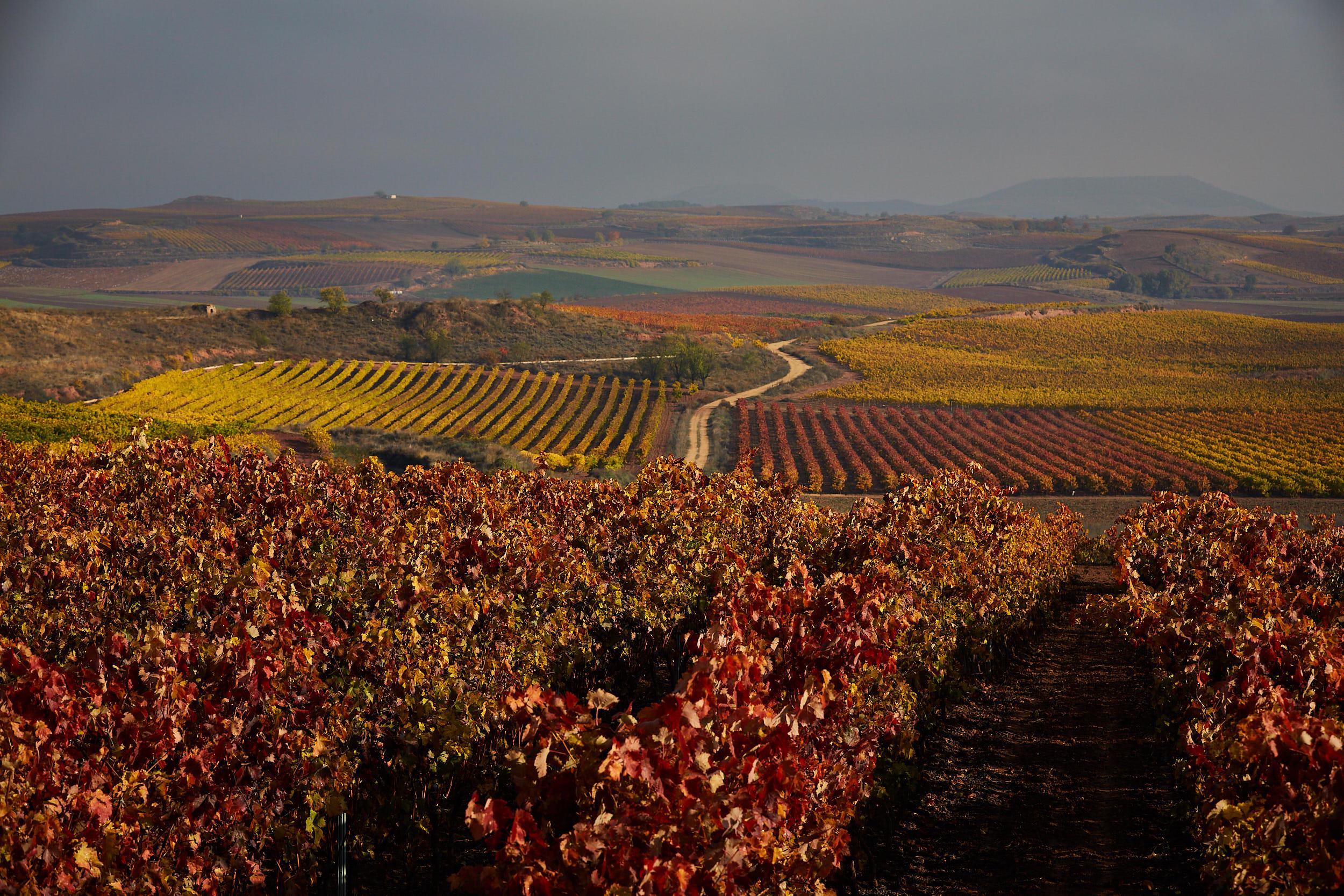 1811Commercial-professional-wine-photography-la-rioja-spain-James-Sturcke_0045.jpg