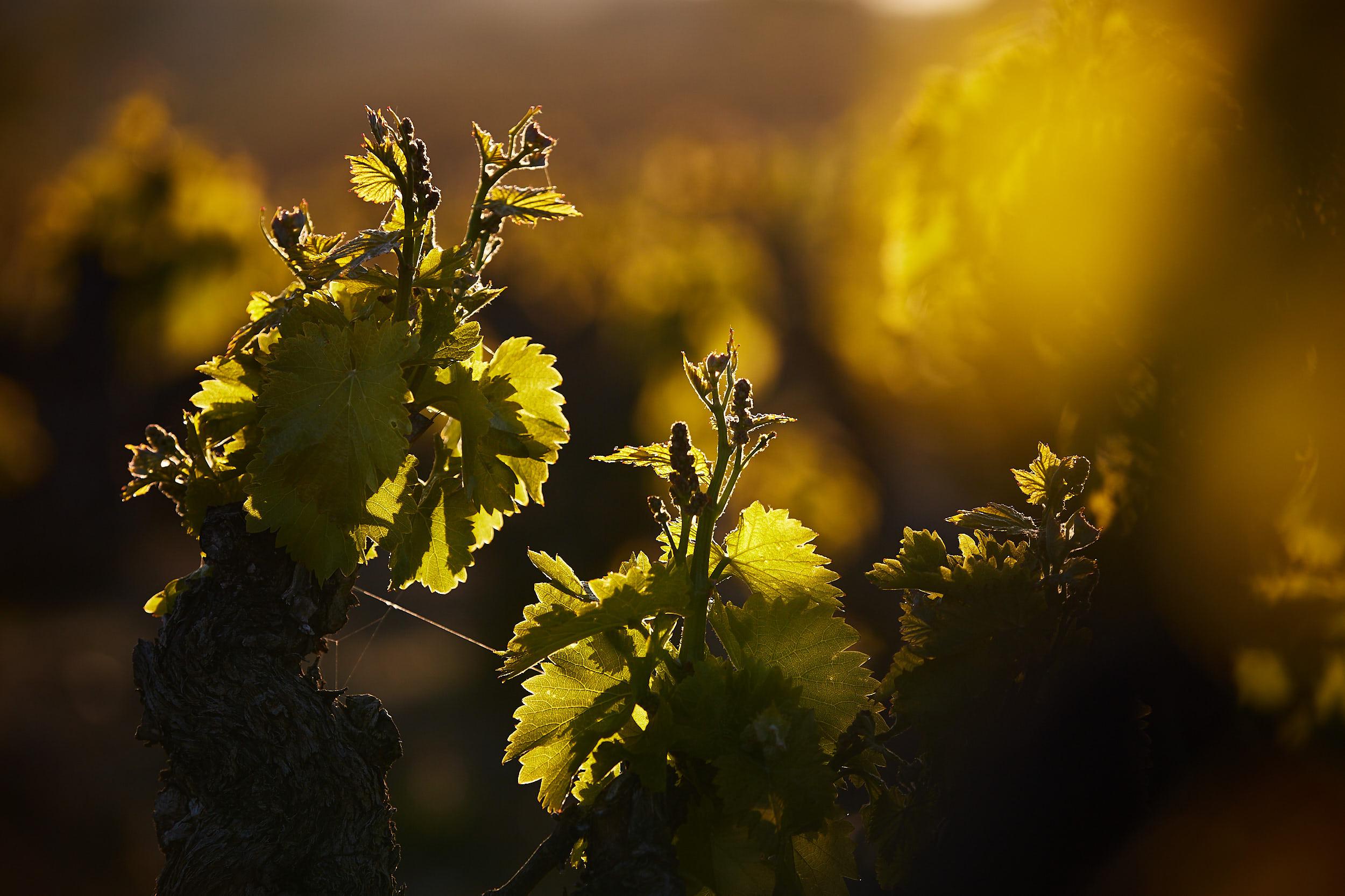 1805fotografia-profesional-corporativa-vino-rioja-espana-James-Sturcke_0013.jpg