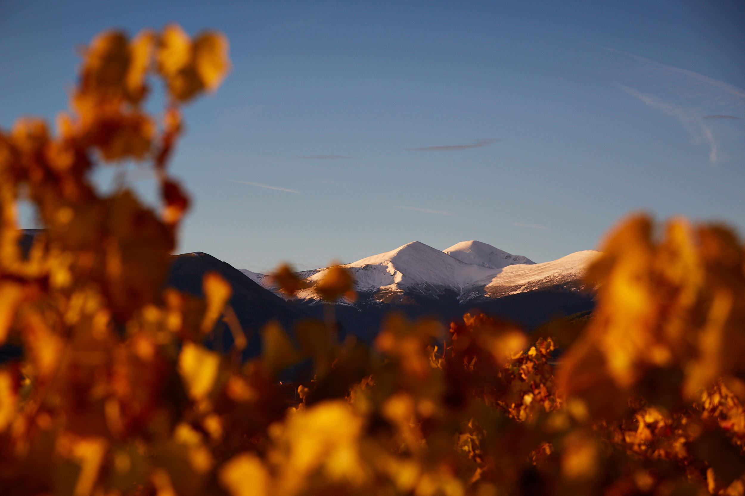 1811fotografia-profesional-corporativa-vino-rioja-espana-James-Sturcke_0047.jpg