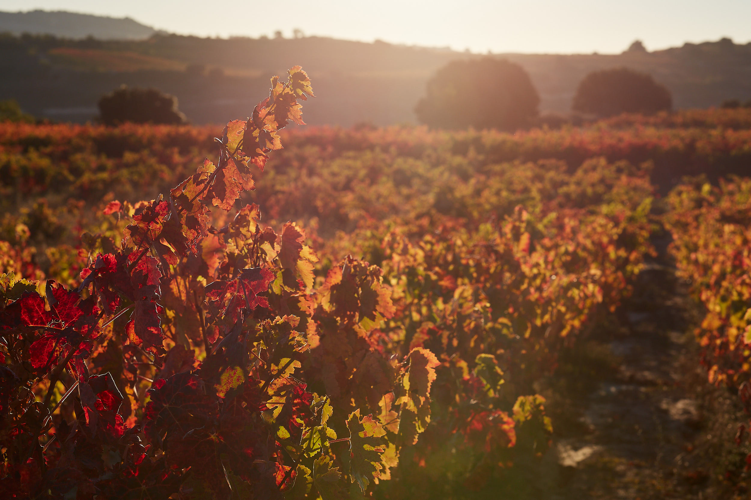 1810Rioja_Wine_Photography_Gomez_Cruzado_0001.jpg
