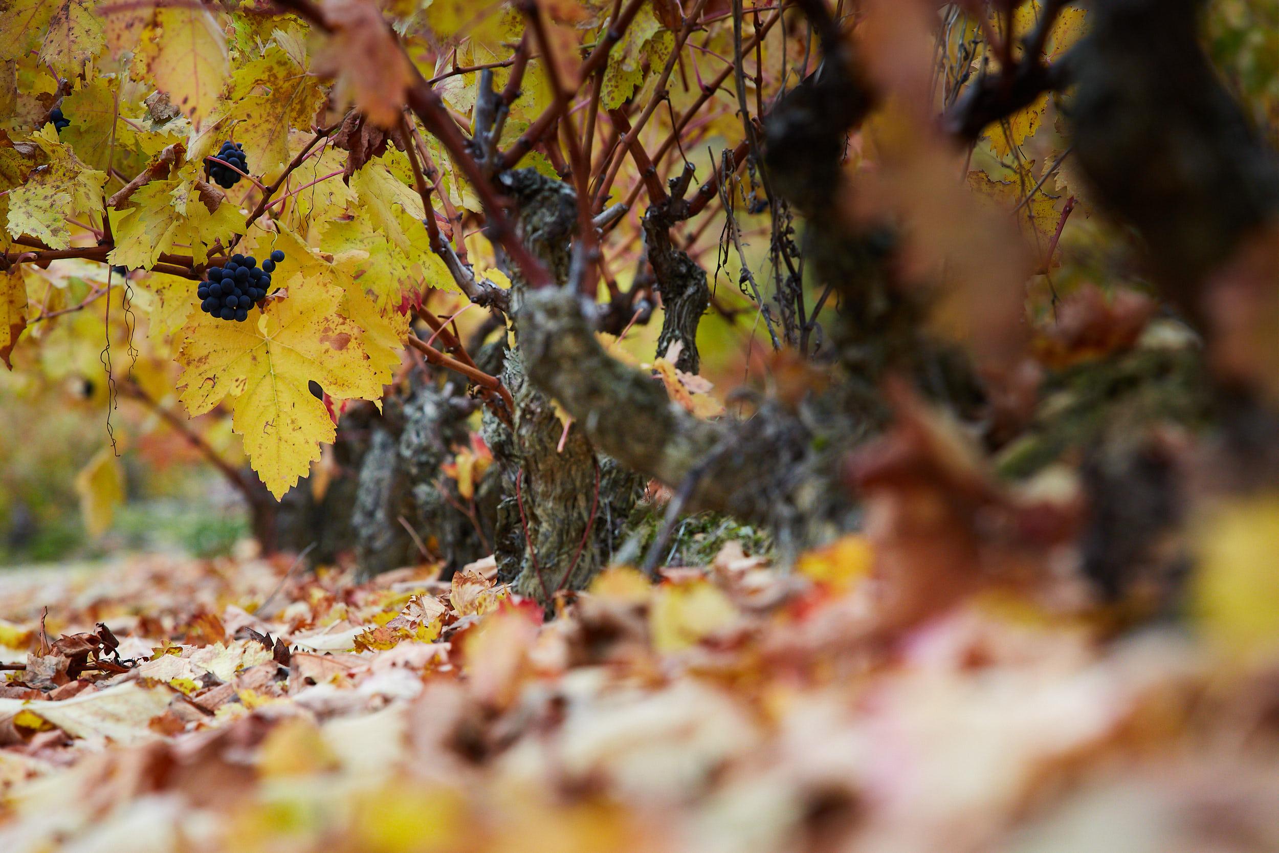 1811Rioja_Wine_Photography_Gomez_Cruzado_0008.jpg