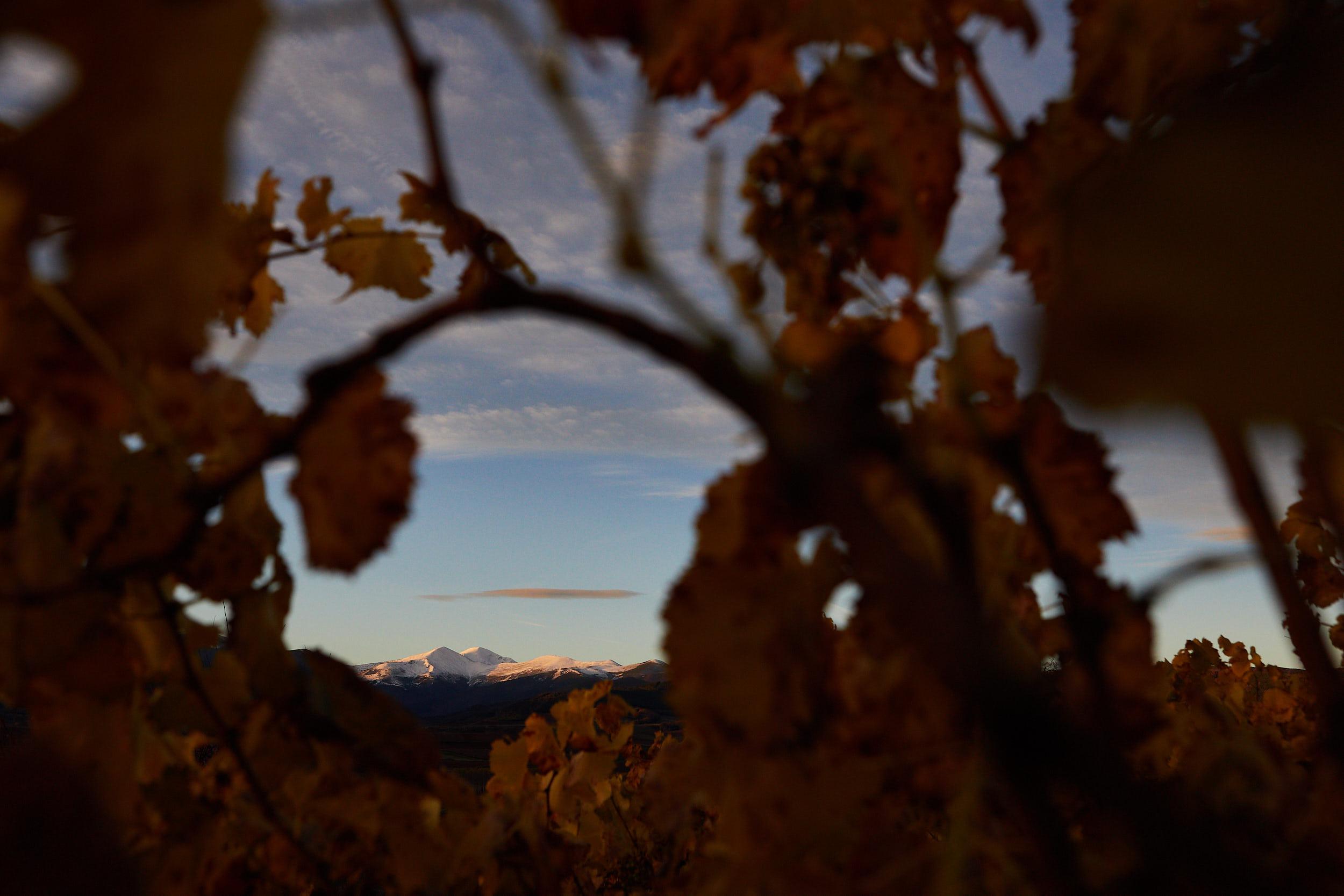 1811Rioja_Wine_Photography_Gomez_Cruzado_0012.jpg
