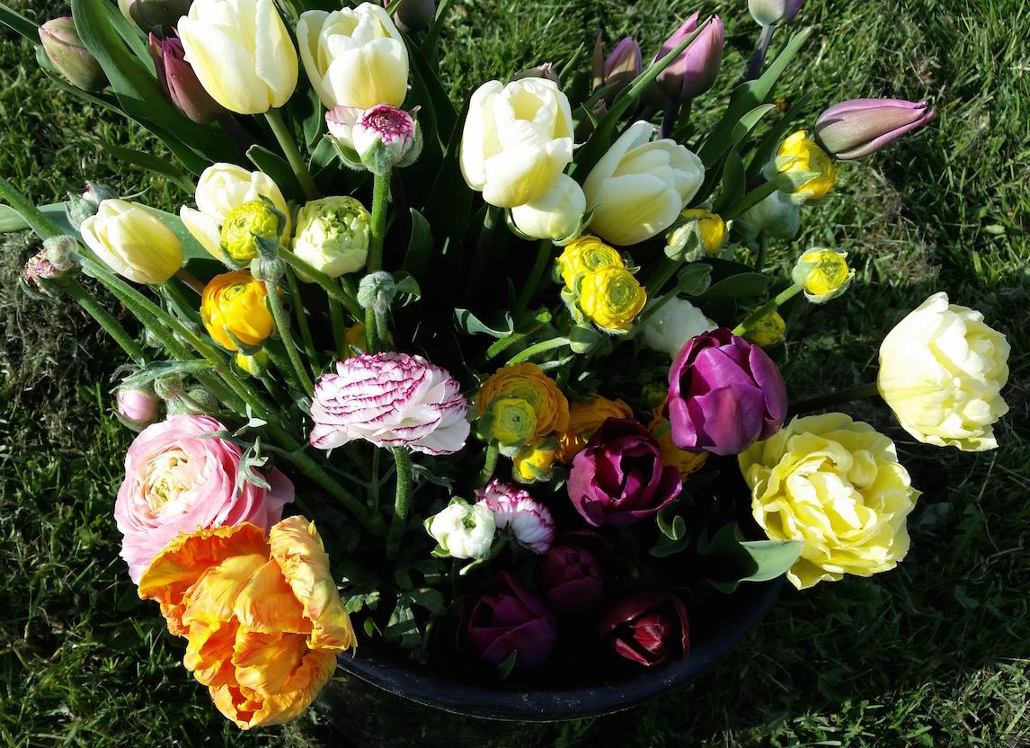gallery-buyflowers-ranunculus-tulips.jpg