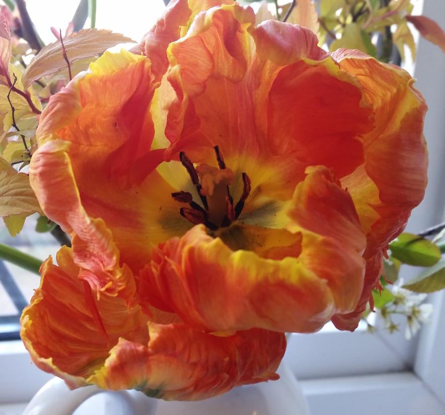 gallery-spring-orangetulip.jpg