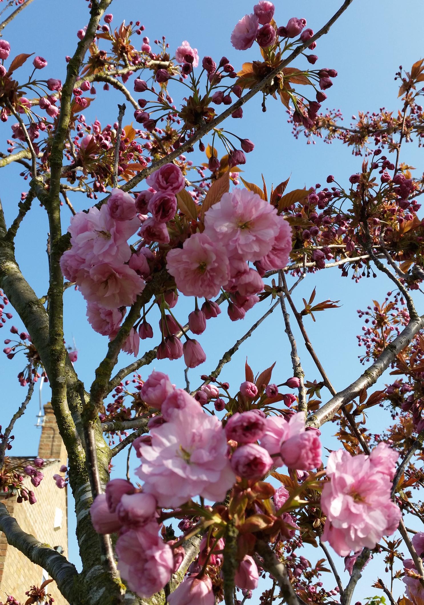 gallery-spring-cherryblossom.jpg