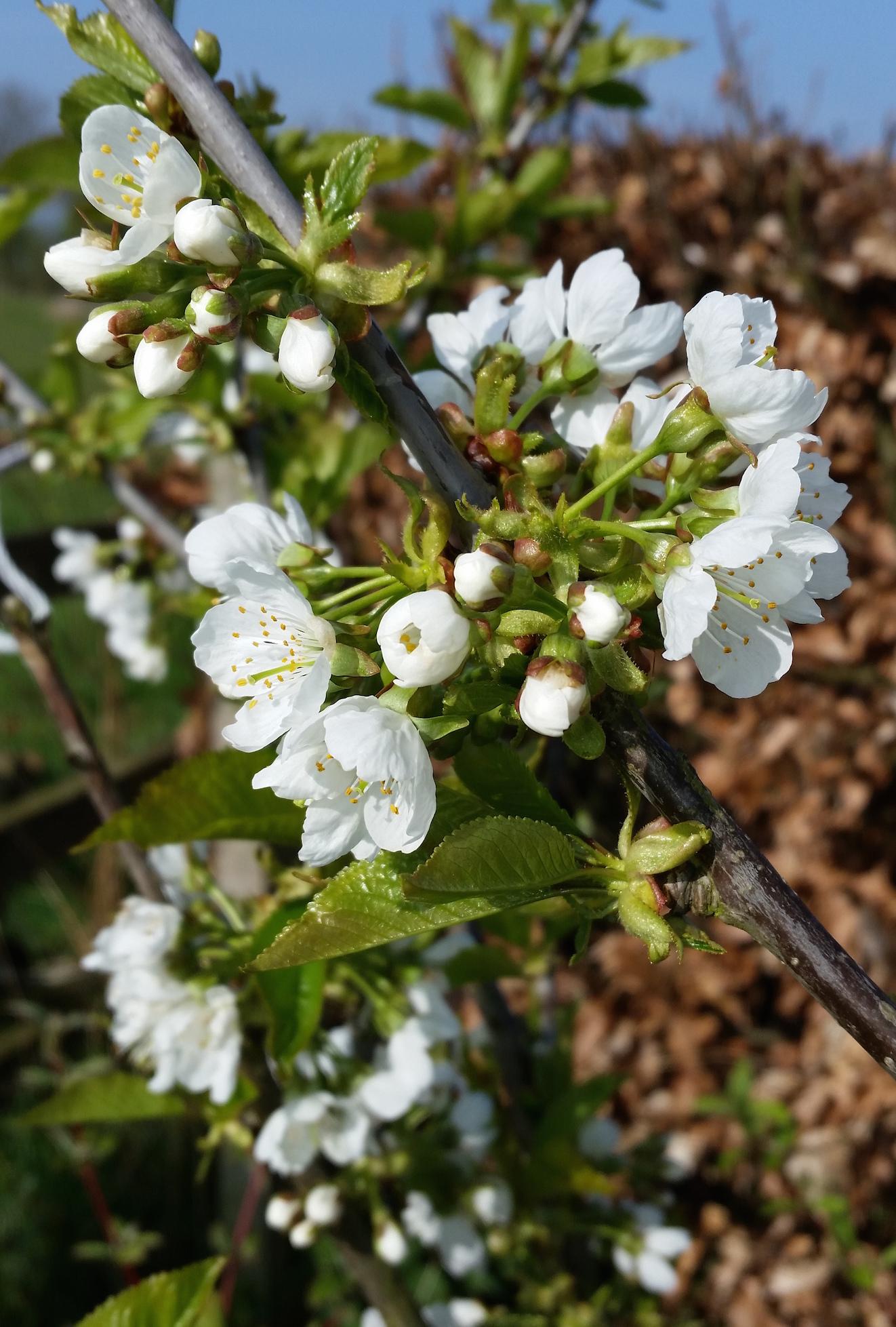 gallery-spring-appleblossom.jpg