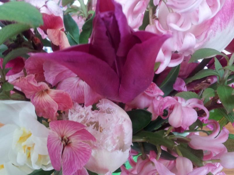 gallery-spring-tulippink.jpg