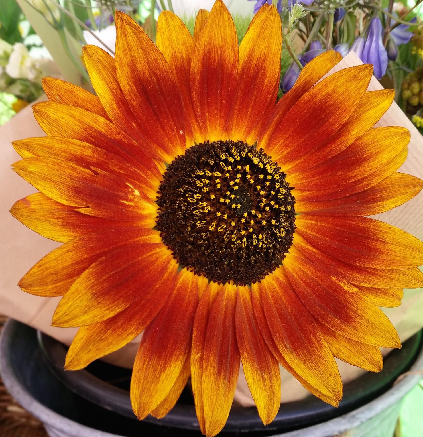 gallery-summer-sunflower.jpg