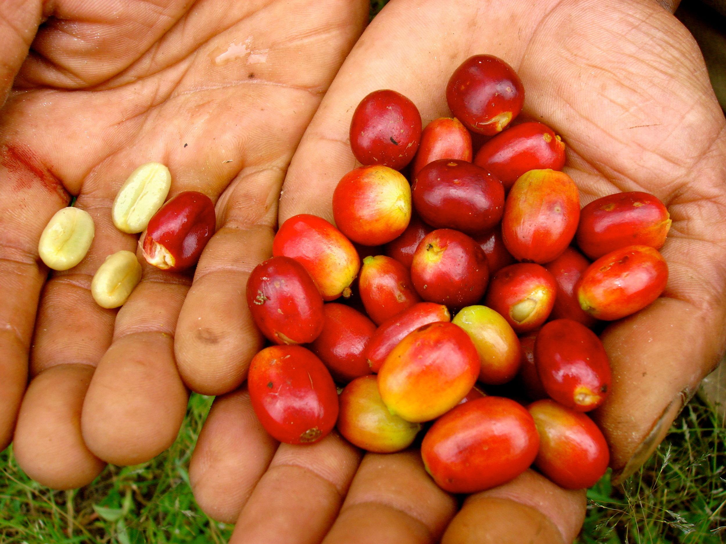 Sumatra 15.JPG