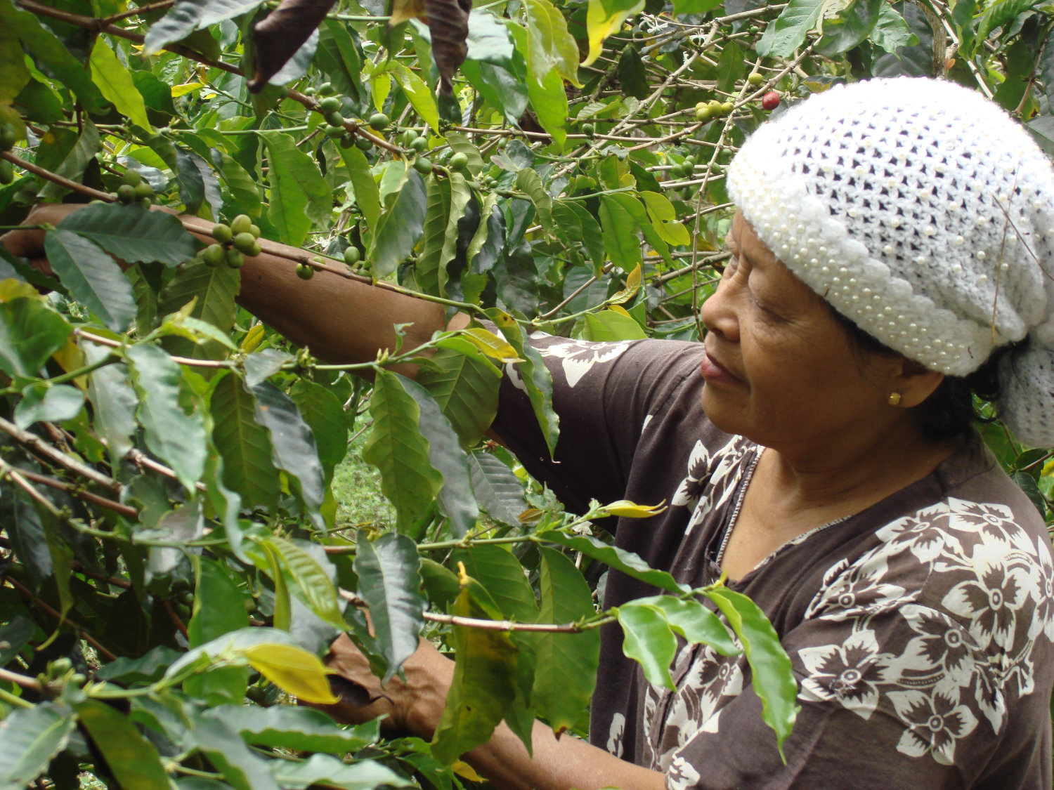 Ethically Sourced Coffee