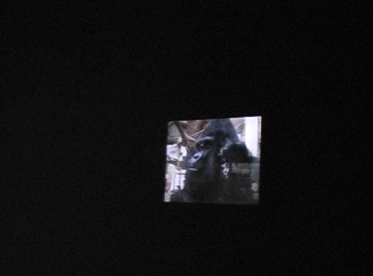 ape house entrance video still jpg 9.jpg