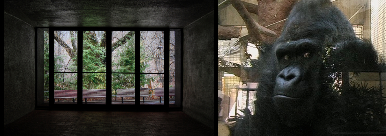 """""""Mopy and the ape house entrance"""", 2005. On left: mixed media, lightbox,transparency 60x60x100cm. On right: video still,3 minute loop. Please see """"Mopy and the ape house entrance"""" in Art Work section"""