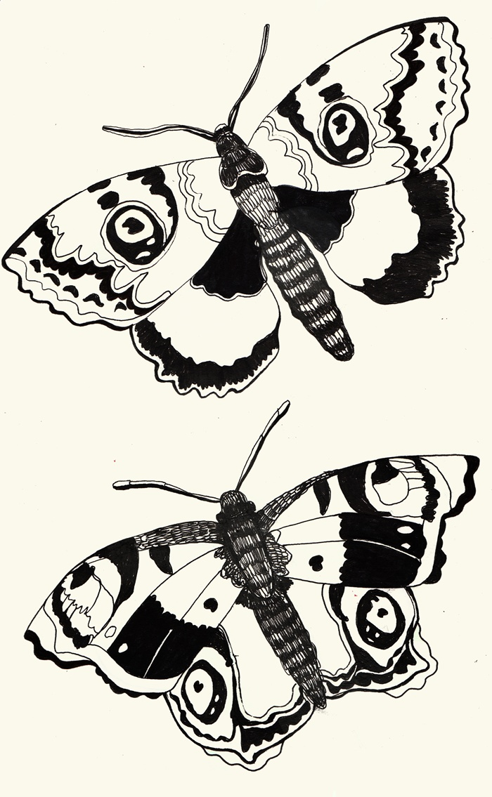 Black and White art of butterflies