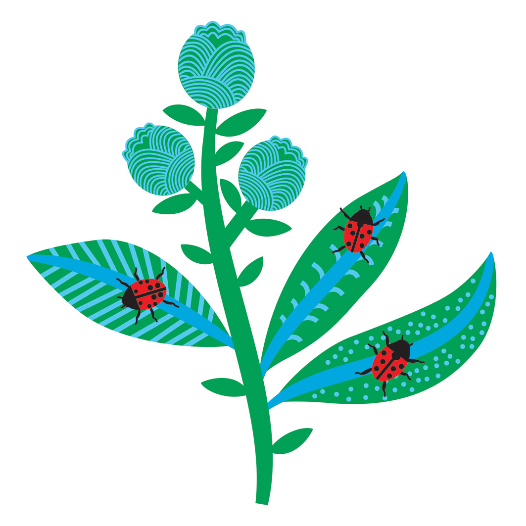 Ladybirds on leaves vector art