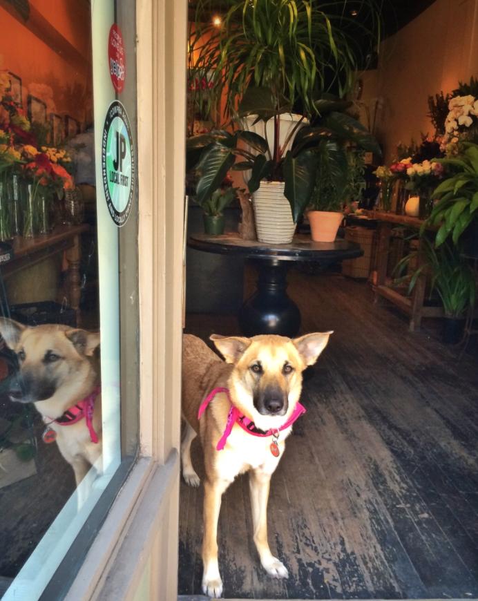 Wilma, New Leaf's Studio Greeter