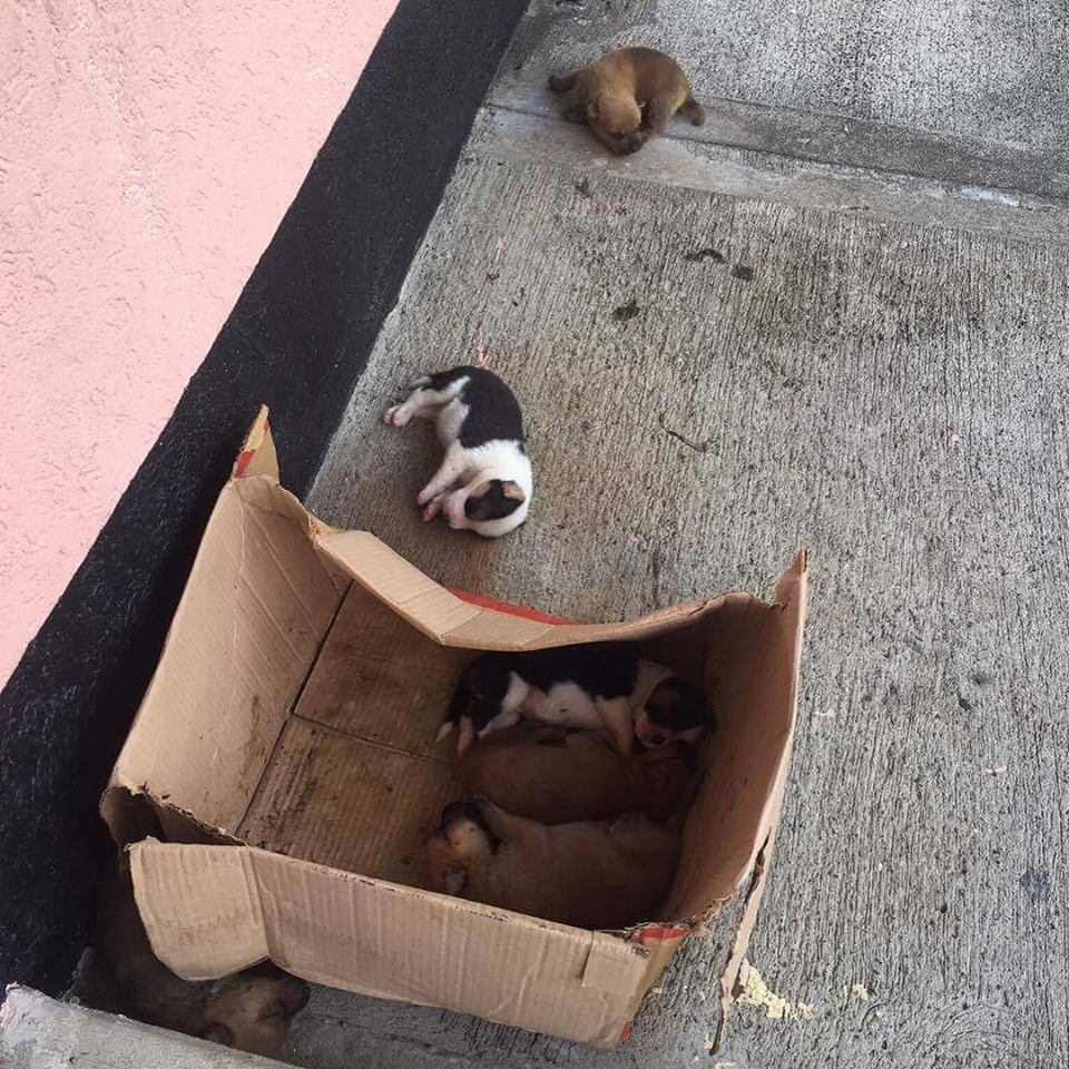 BSG is the Black and White and Tan pup outside the box :(:(